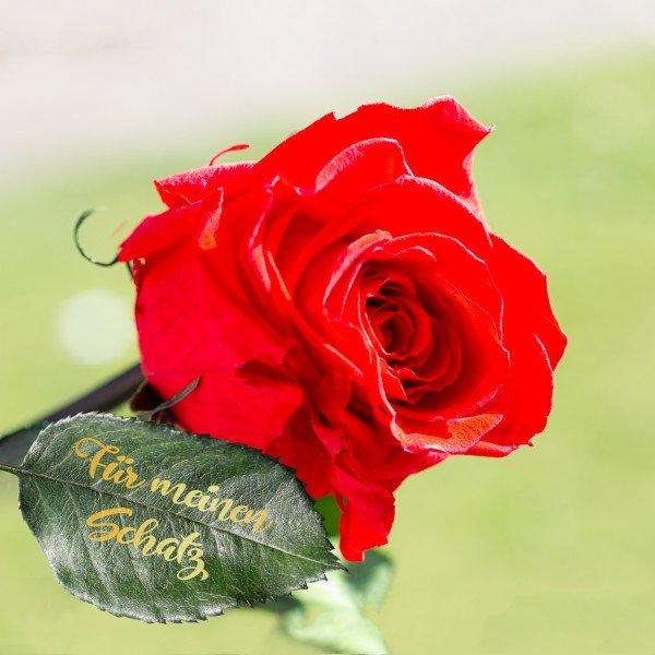 Ewige Rose mit persönlicher Beschriftung
