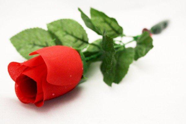 Sprechende Rose
