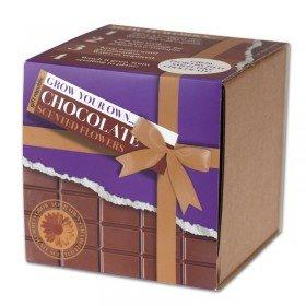 Pflanzset - duftende Schokoladenblume
